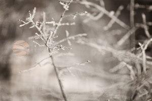 Sezoninis afektinis sutrikimas simptomai